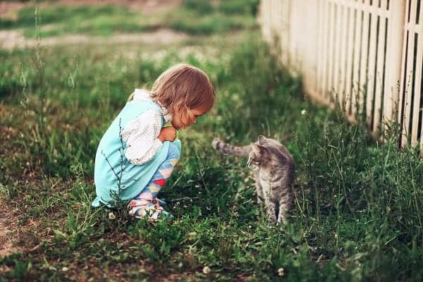 A little girl plays with her kitten in the un-trimmed grass of her backyard