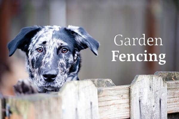 "A dog peeks up over a wooden fence beside the words ""Garden Fencing"""