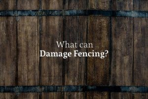 "An old, rotting wooden fence with the words ""What can Damage Fencing?"""